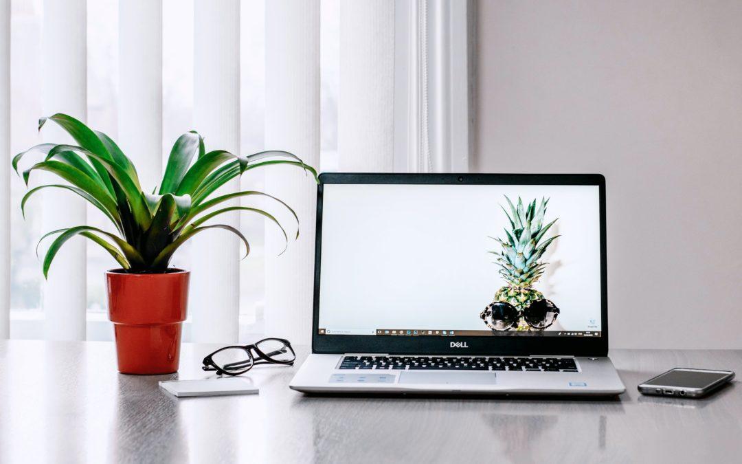 Rośliny do domowego biura – które najlepsze?